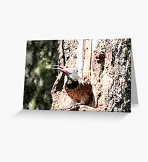 Male Flicker Greeting Card