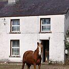 IRELAND  by Edward  manley