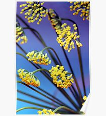 Fennel flowers Poster
