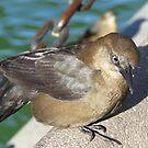 Begging bird by Christine Ford
