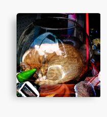 Ironic Cat Canvas Print