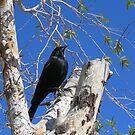 Blackbird Fly.... by Christine Ford
