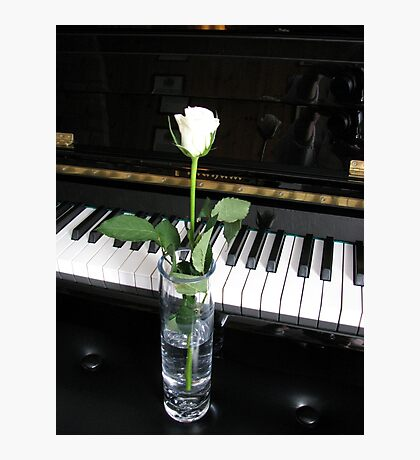 The Musical Rose Photographic Print