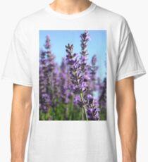 Lavandula angustifolia v.Bee growing on Shearers Slope Classic T-Shirt
