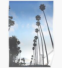 palm tree 7 Poster
