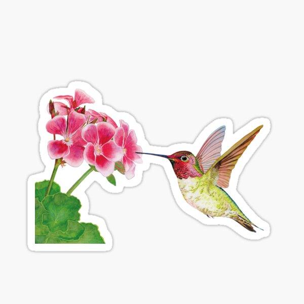 Hummingbird on geranium flower Sticker