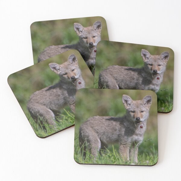 Coyote Pup with a Cherry Coasters (Set of 4)
