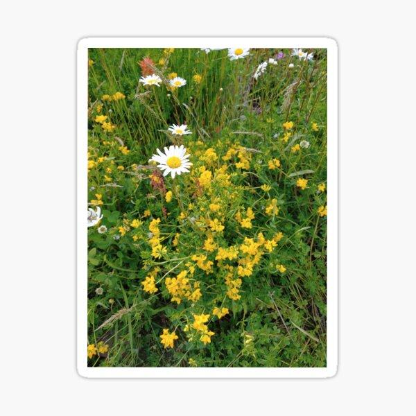 Wildflowers near Mt St Helens Sticker