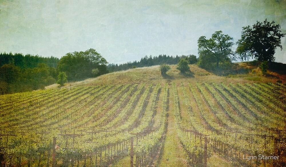 Vineyard by Lynn Starner