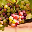 Grapes by JEZ22