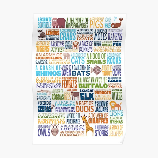 Animal Group Terminology - Funky Font Edition with Animals Poster