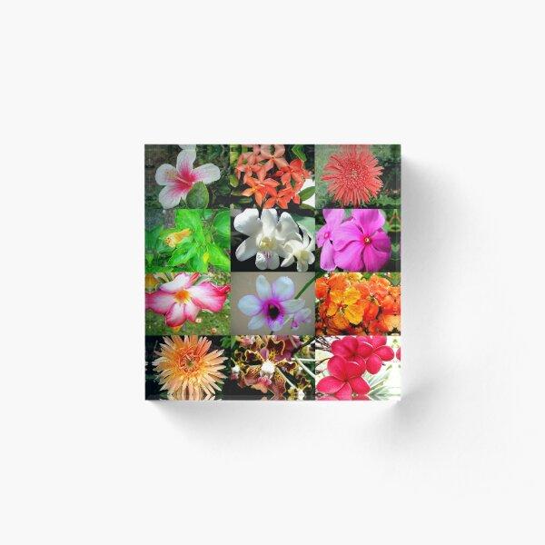 Flower Matrix Hibiscus, Orchids, African Daisies Acrylic Block