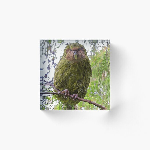 Kakapo Portrait Acrylic Block