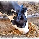 Cow by Giuseppe Cocco