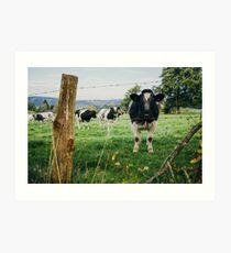 Cow Herd Art Print