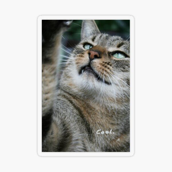 Cool, says the cat. photo Transparent Sticker