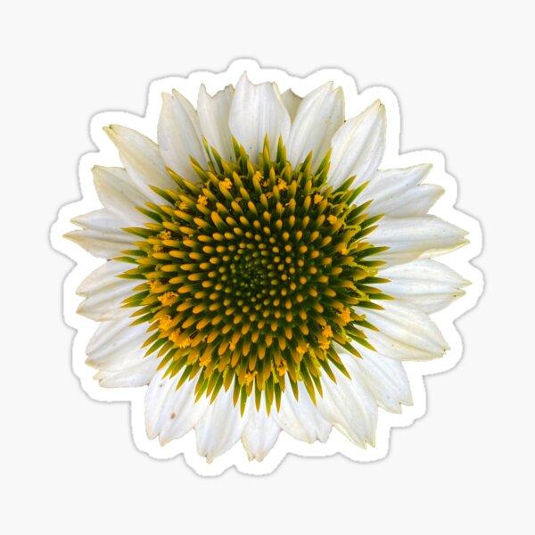 Close Up Echinecia Sticker