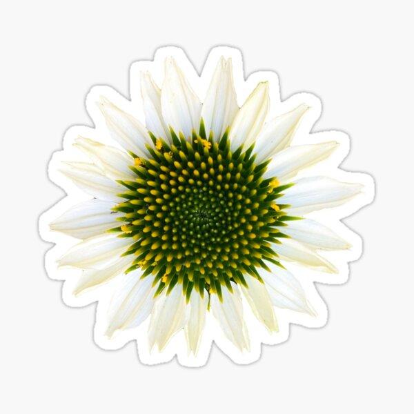 Echinecea Flower Sticker