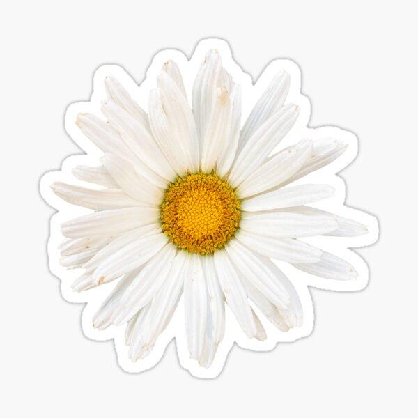 Daisy For You Sticker