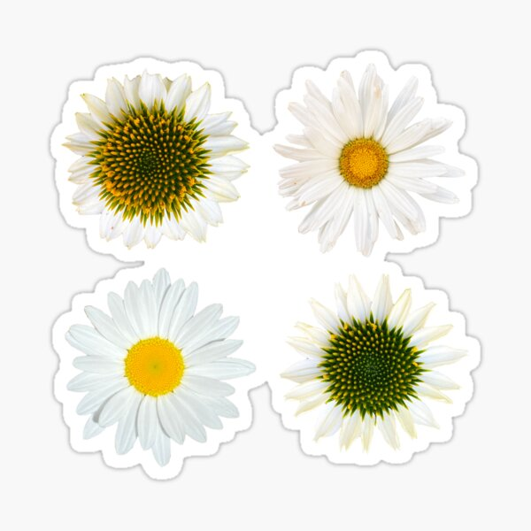 Daisies And Echinacea Flowers Sticker