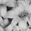 Monochromatic Flowers by SunDwn