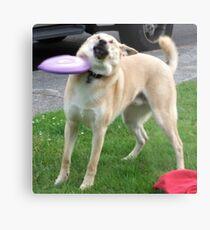 Frisbee Doge Metal Print