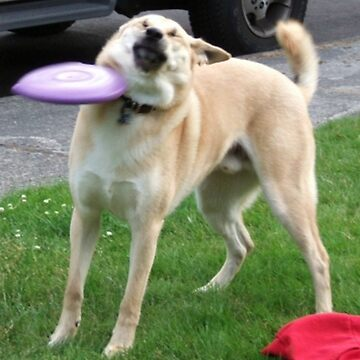 Frisbee Doge by snacksbuddy