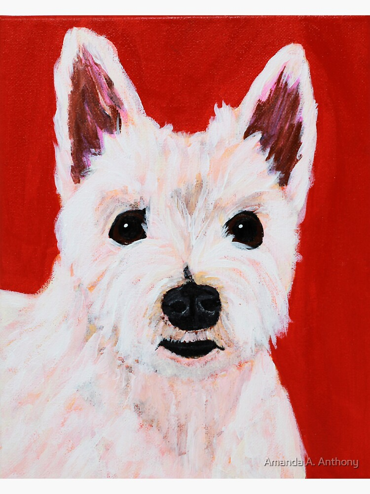 Romeo the Westie  by AmandaAAnthony