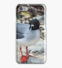 Swallow-tailed gull iPhone Case/Skin
