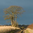 Afternoon Sunlight and Cloud by Sue Robinson