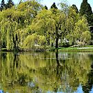 Trees Reflected in the Lake by AnnDixon