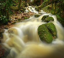 Tasmanian mountain stream by Kevin McGennan