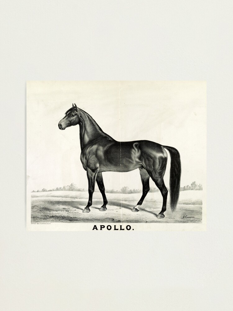 Alternate view of Apollo - sired by Seneca Chief - 1885 - Currier & Ives Photographic Print
