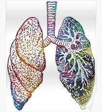 Lungs - Colours Poster