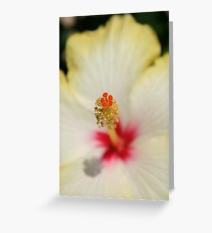 Close Up of Stamen And Pollen Yellow Hibiscus Greeting Card