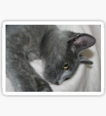 Close Up Portrait Of A Relaxed Grey Cat Sticker