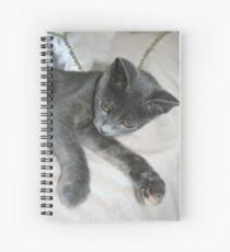 Cute Grey Kitten Relaxing Spiral Notebook
