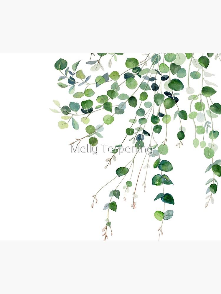 Eucalyptus Watercolor by MellyTerp