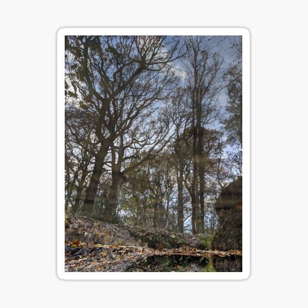 Reflections 1 - Woodland Sticker