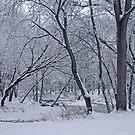 Winter Days Along The Creek by kkphoto1