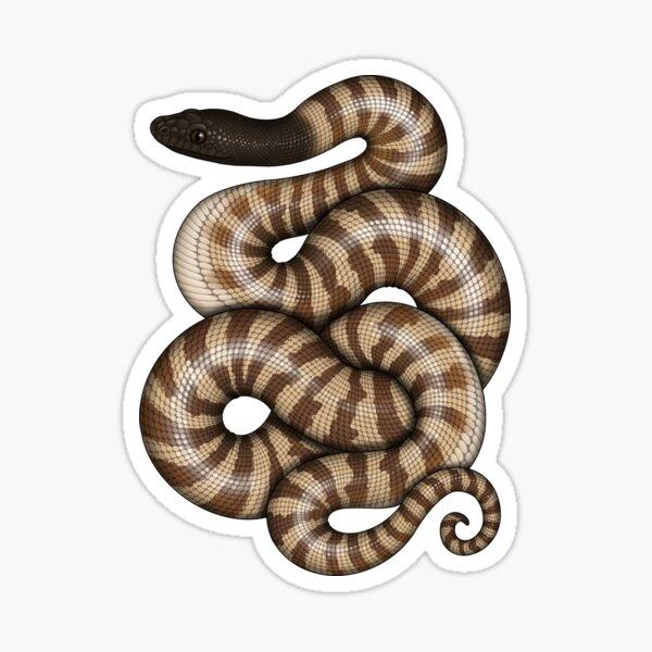 Black-headed Python Sticker