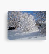 Glistening Trees ^ Canvas Print