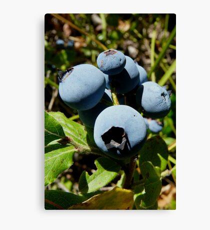 Blue Berries Canvas Print