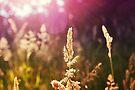 Grass by Nigel Bangert