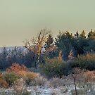 Deer in meadow by Jim Cumming