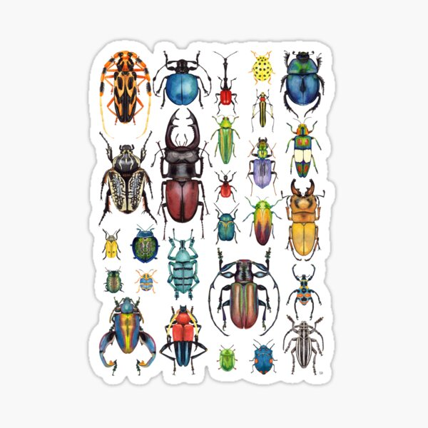 Beetle Collection Sticker