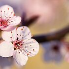 Signs Of Spring by iltby