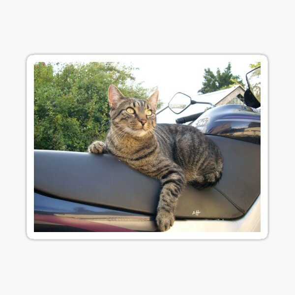 Cool cat on the motorcycle, photo Sticker