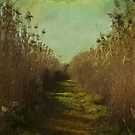 The path into the unknown by VictoriaHerrera