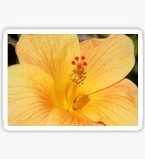 Golden Hibiscus Sticker